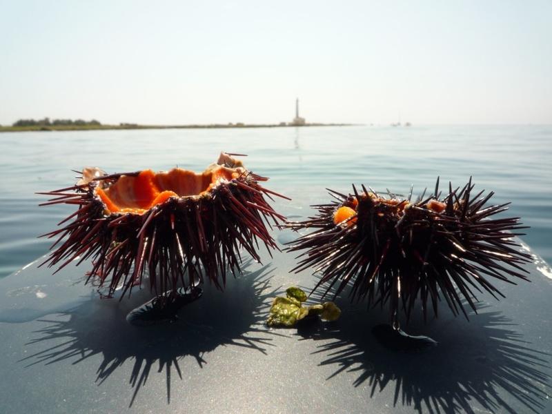 I Ricci E Lo Sfondo Del Mar Ionio
