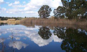 Laghi Alimini Otranto - limpido specchio d'acqua