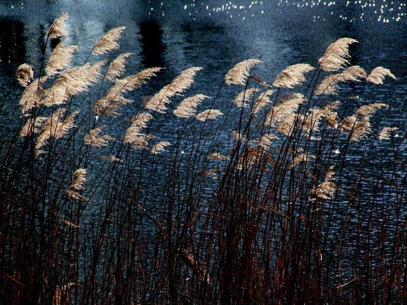 Piante acquatiche su sfondo notturno