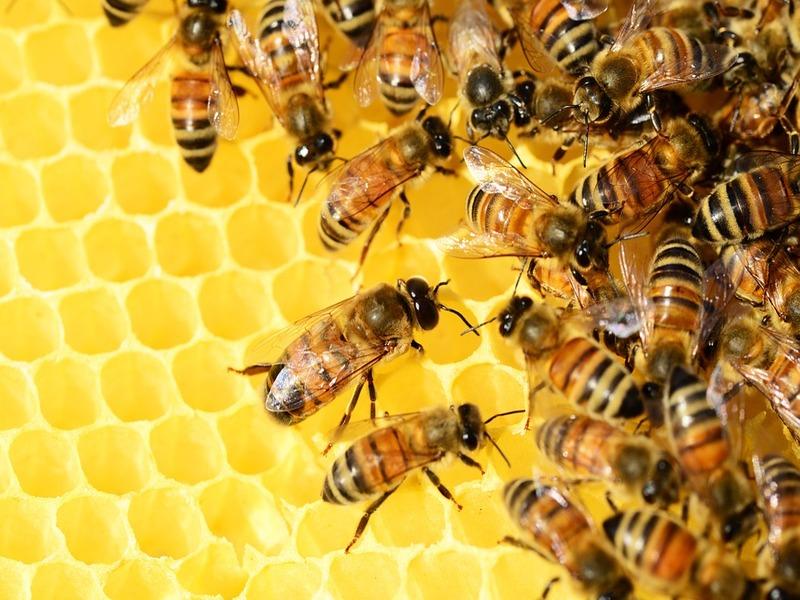 Cera d'api prodotta al Monastero