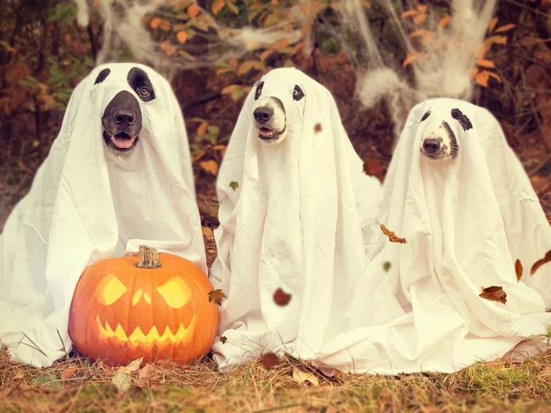 Halloween In Salento