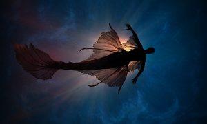 Karkade Sirena