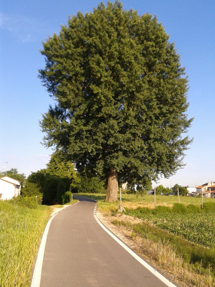Ciclabile Adige - Po, ph Massimo Morino