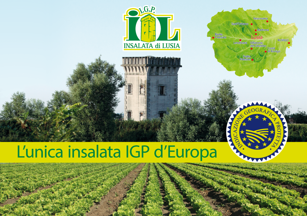 Insalata Di Lusia Igp Ph Sito Insalatalusia.it