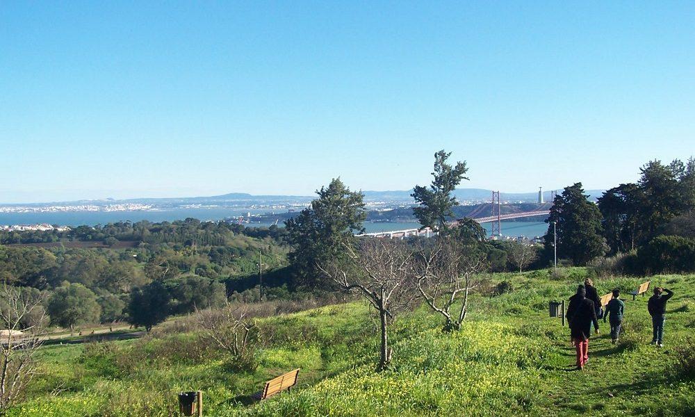 Parco Forestale Monsanto - Vista