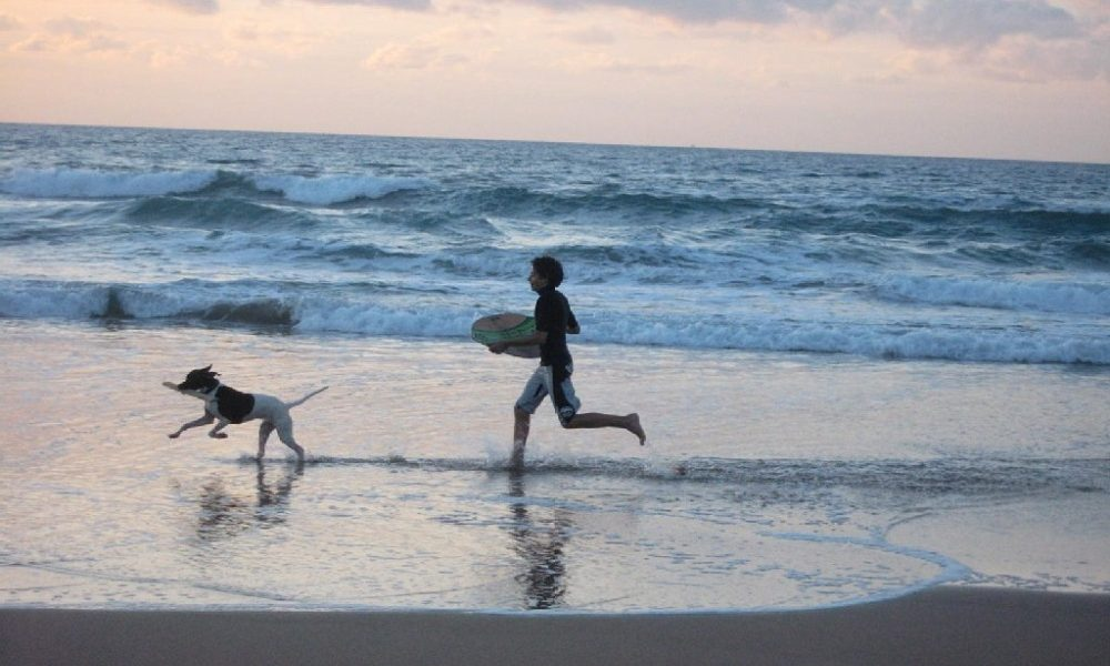 spiagge dog-friendly - Cane In Spiaggia