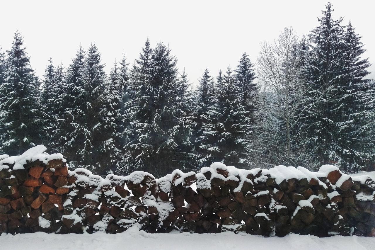 Gli alberi di Natale abeti sotto la neve