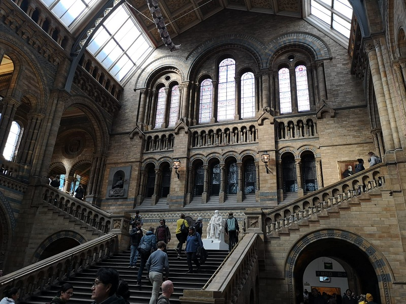 Natural History Museum. Le scalinate