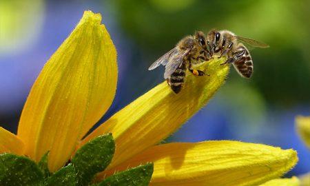 A Londra una strada per proteggere le api