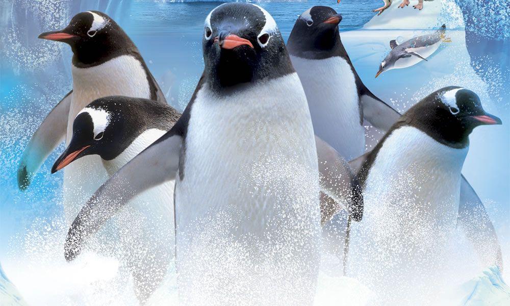 tanti pinguini in posa nell'acqua