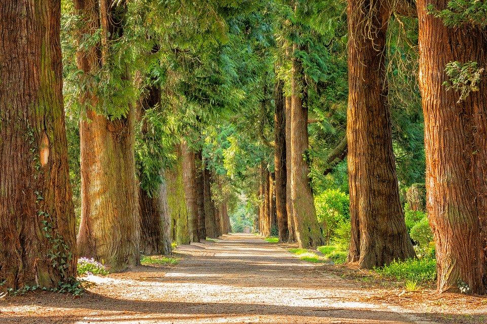seconda fase: foto con alberi verdi e un sentiero