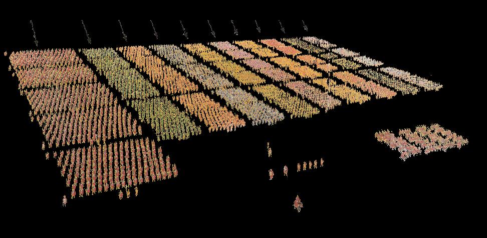 Esercito schierato - esercito romano