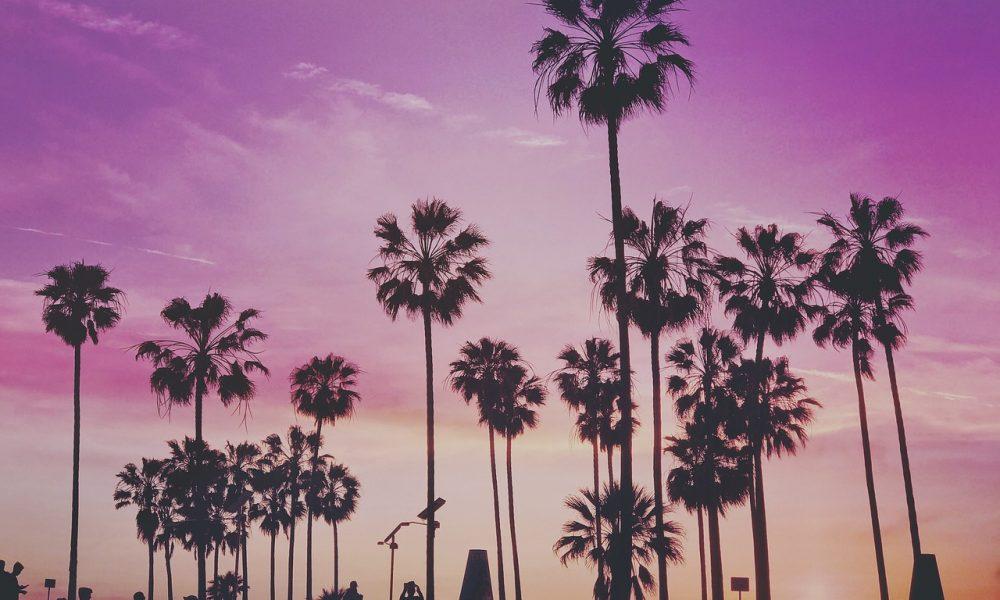 Palme con in sfondo un cielo rosato