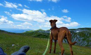 volare con cani e gatti dall'Italia a Los Angeles -cane che guarda aereo