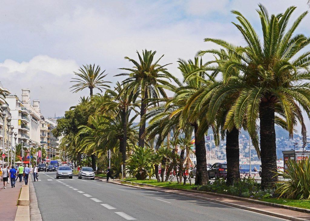 Nizza, palme lungo viale