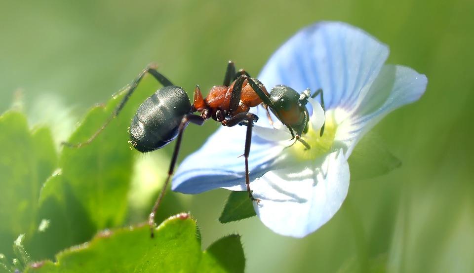 Museum of Jurassic Technology - foto di una formica