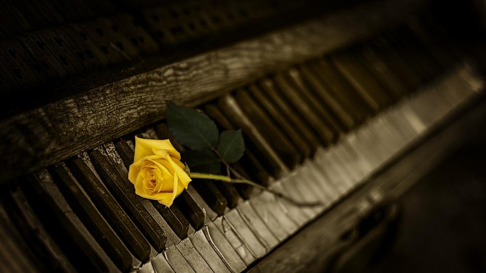 il giorno della memoria- rosa gialla