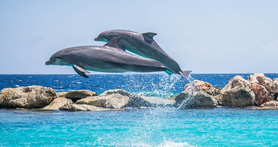 EMDinmycountry - immagine di delfini che saltano
