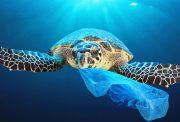 un mondo più pulito: trartaruga marina che mangia plastica