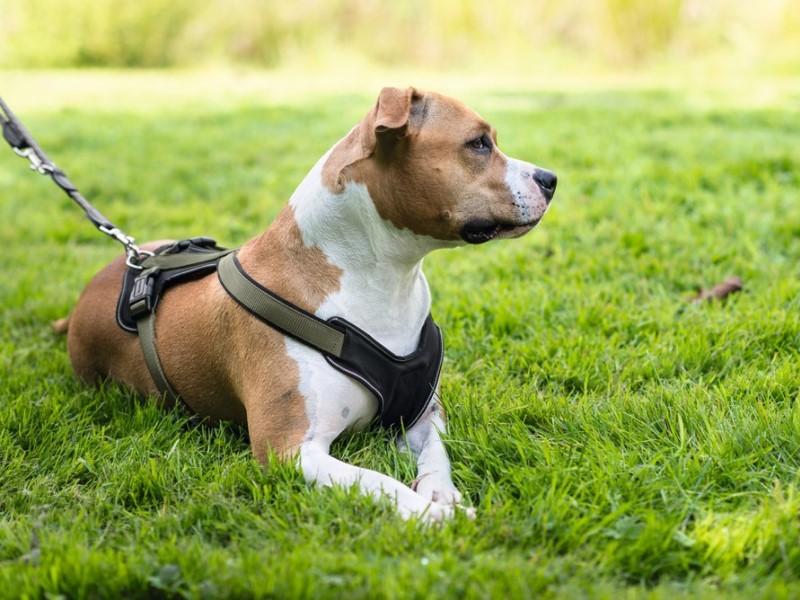 cane da corsa per la canicross race