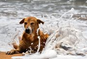 spiagge dog-friendly -un cane in acqua