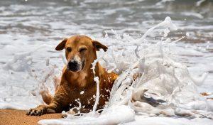 spiagge dog-friendly -un cane in acqua