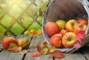mela autunno