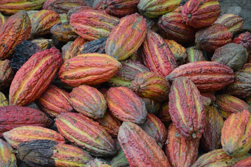 cioccolato - fave di cacao