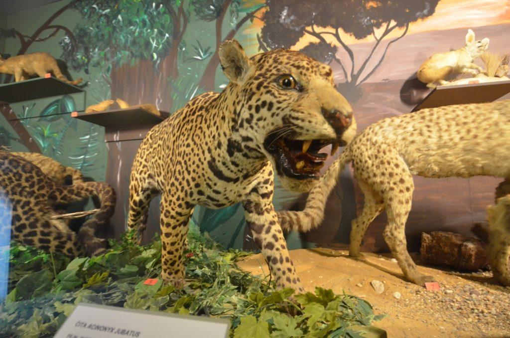 Il Museo Nazionale di Storia Naturale, animali esotici