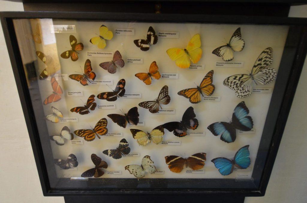 Il Museo nazionale di Storia naturale, collezione di farfalle