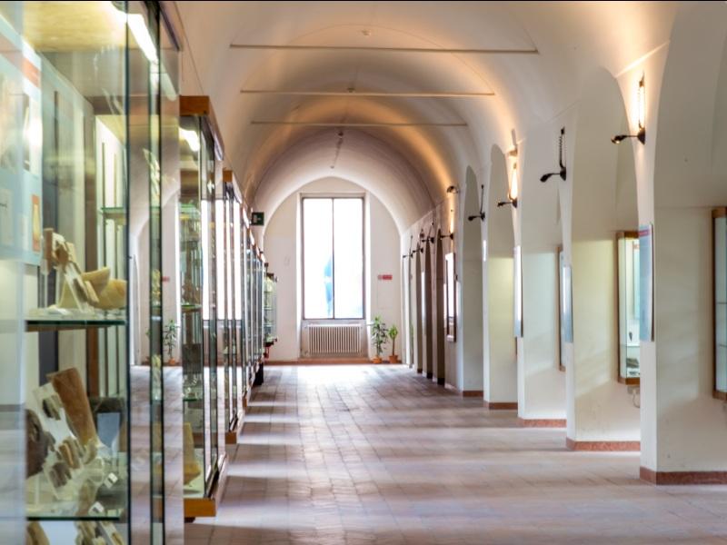 Grotta dei pipistrelli. il museo Ridola