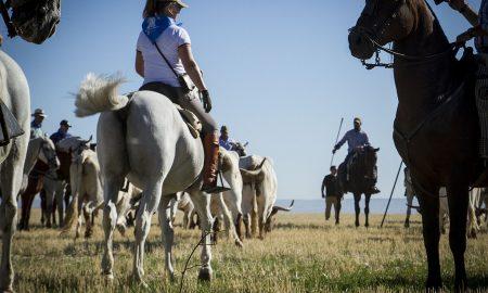 La transumanza - Transumanza a cavallo