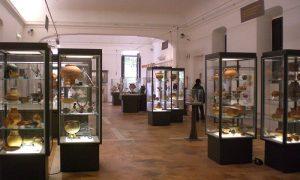 Museo Lucania Occidentale - Museo Lucano