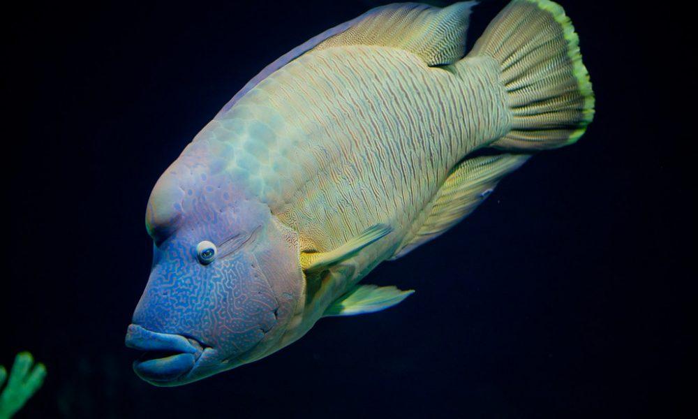 Un pesce fotografato per un concorso subacqueo