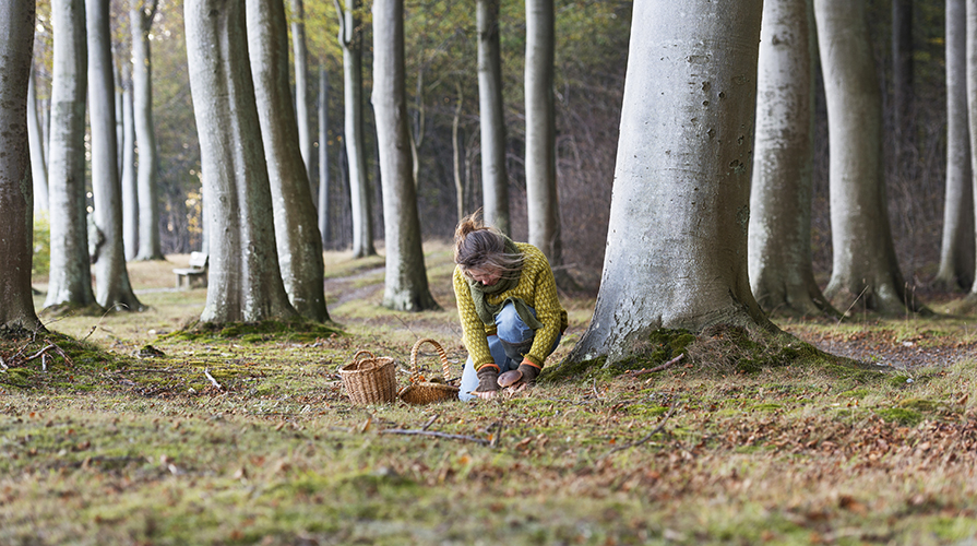 La raccolta delle piante spontanee