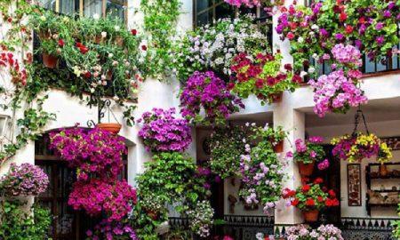 Cropped Balconi Fiore.jpg