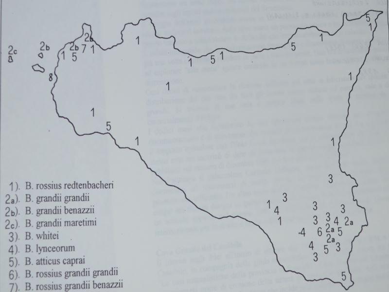 Insetti stecco: Cartina di localizzazione degli insetti stecco
