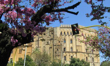 La Jacaranda è tra i fiori di Palermo più caratteristici e affascinanti