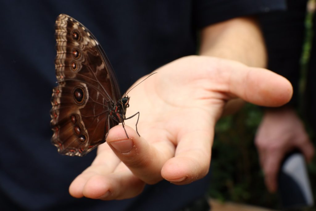 Casa delle Farfalle, farfalla poggiata su mano