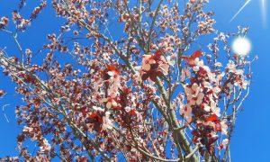 Arrivo della primavera: la natura si risveglia alla luce