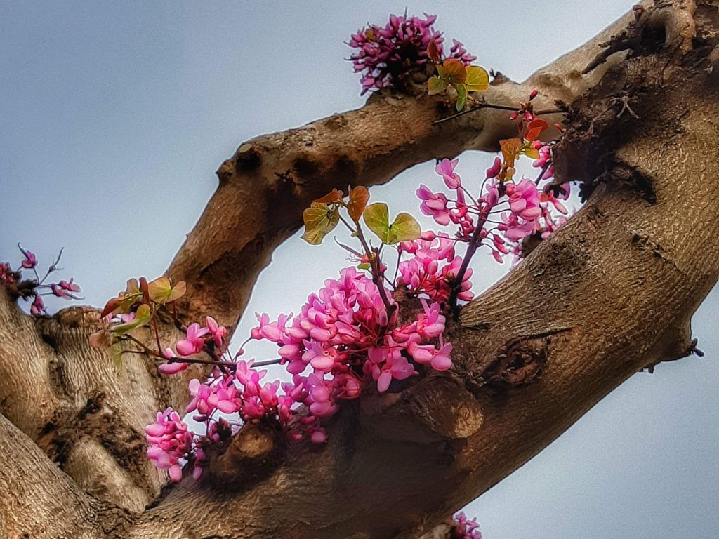 Arrivo della primavera: germogli al primo ardore