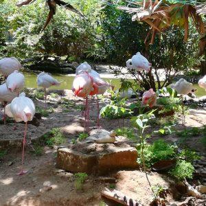 Fenicotteri del Parco Orleans