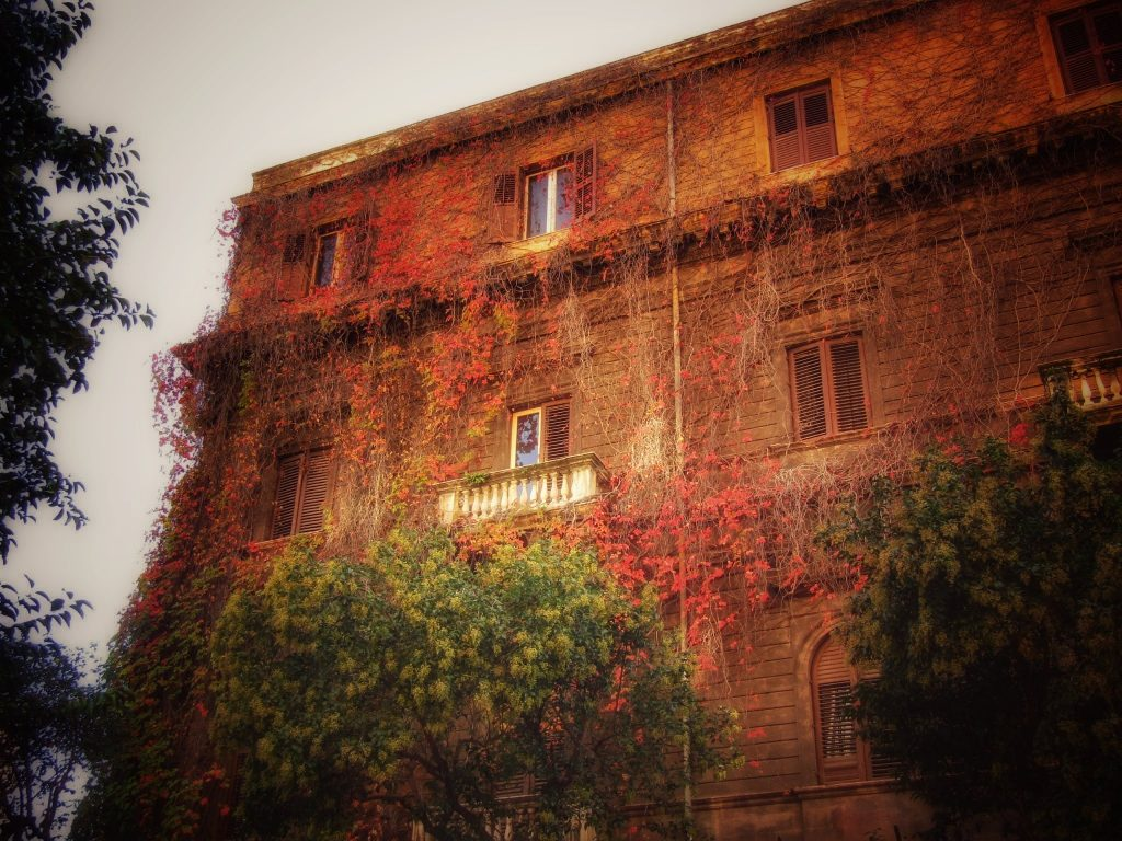 Palermo d'autunno: fogli rosse si arrampicano sugli antichi palazzi