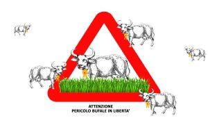 Bufale In Libertà