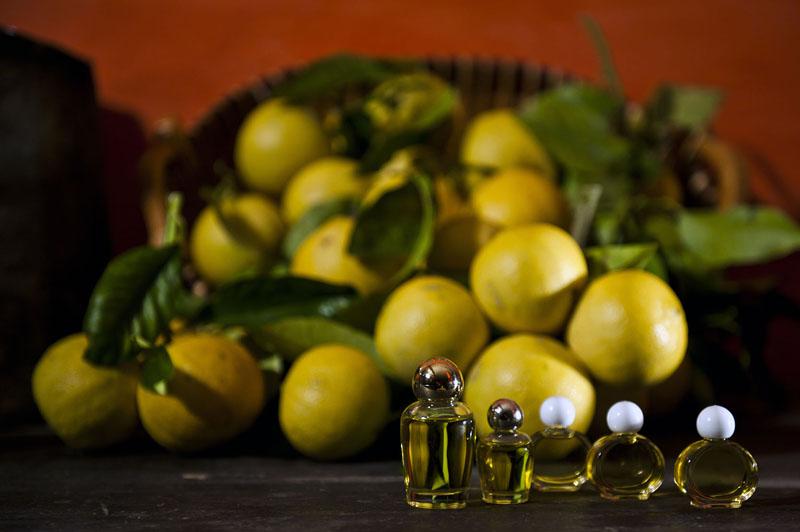 Dal bergamotto si ricava l'olio essenziale impiegato in vari settori