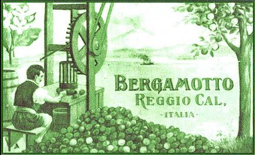 Illustrazione Sull'estrazione Del Bergamotto