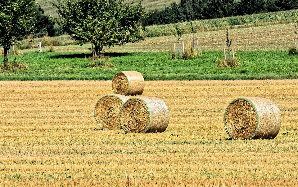 la calabria e i campi coltivati