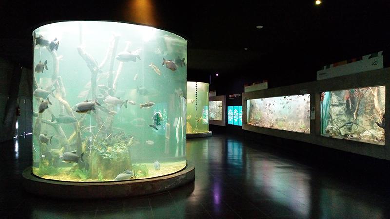 acuario - peceras