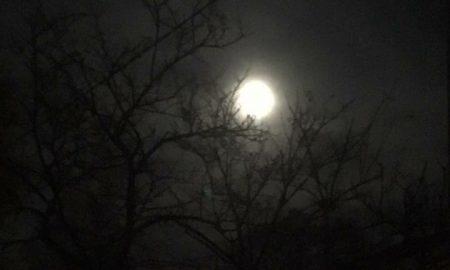Luna rodigina