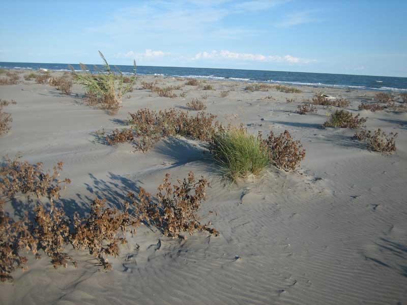 Il tipico aspetto della spiaggia di Scano Boa